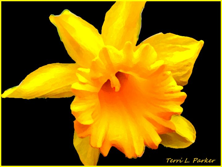 Yellow Daffodil 1 - Artgal Creations