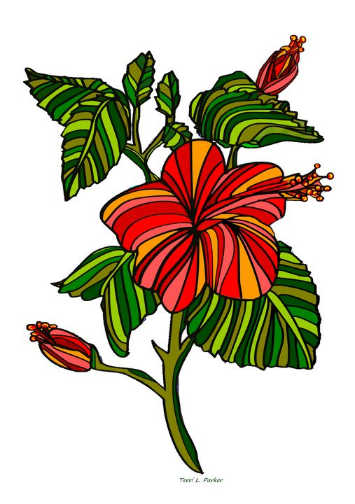Hibiscus Flower Two By Terri Parker - Artgal Creations