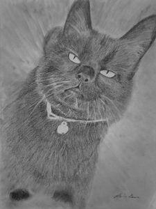 Black fat cat