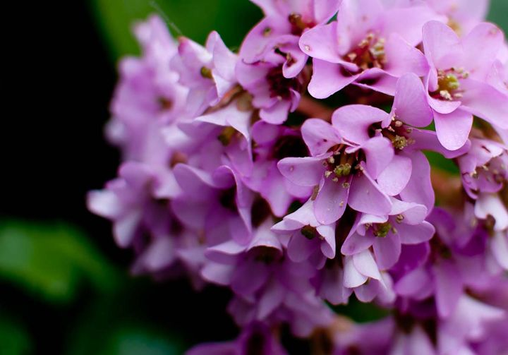 Pink garden Flowers - Jo Egerton