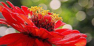 Art of flower - Danai Saligupta