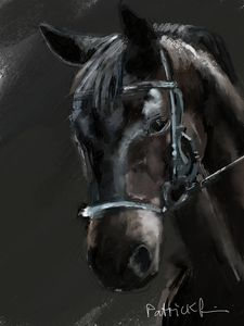 A dark brown horse.