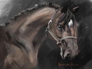Portrait Horse78