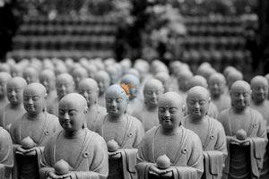 Orange Leaf Monks