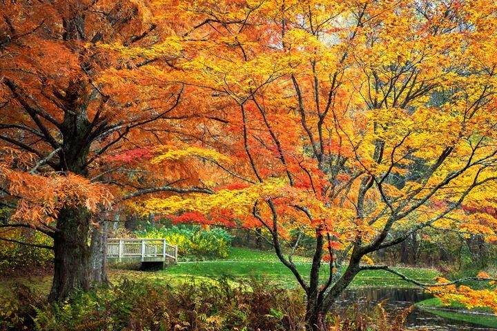 Autumn Bliss - Dennis Sabo Photography