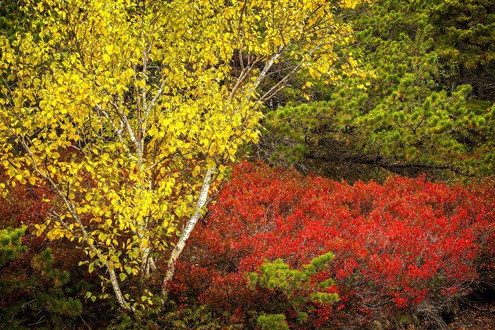 Seasonal Contrast - Dennis Sabo Photography