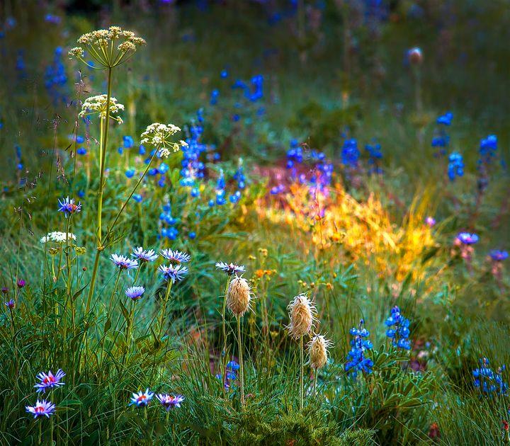 Midsummer's Night Dream - Dennis Sabo Photography