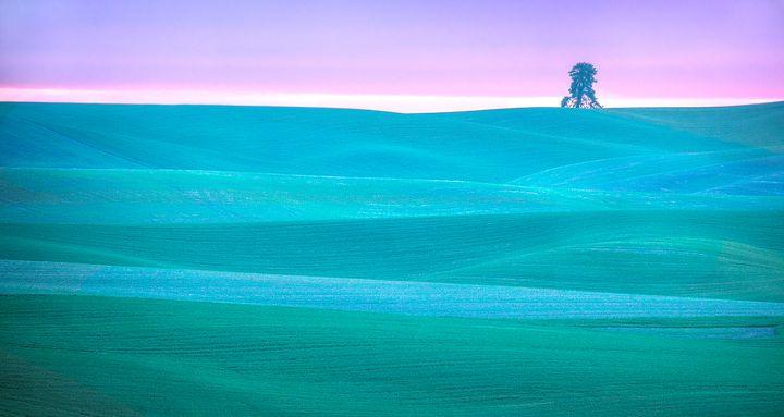 Nature's Radiance - Dennis Sabo Photography