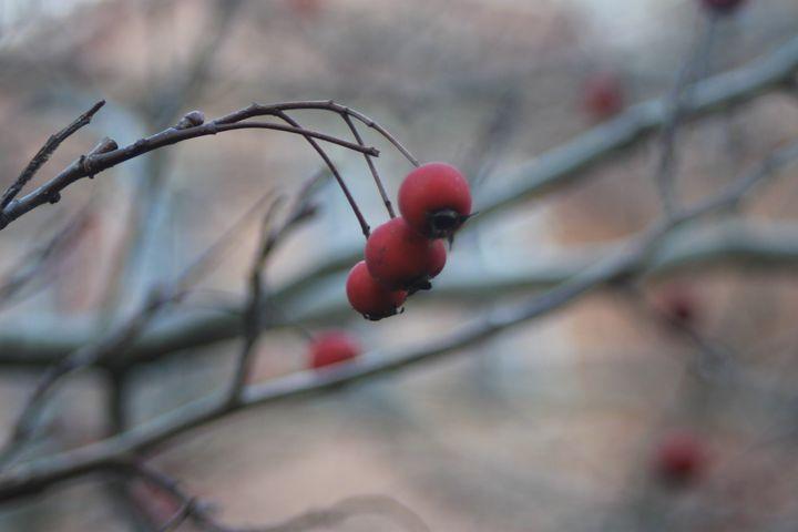 Berries - Sarah Theller: Artist