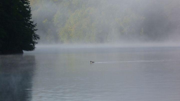 lone loon on foggy lake - Leon Szymanski