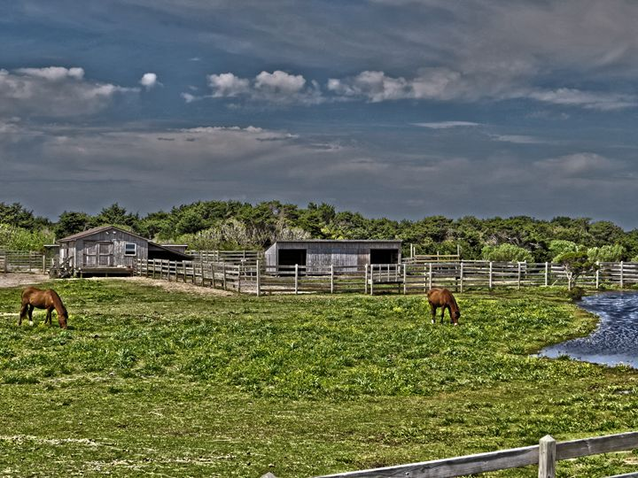 Ponies of Ocracoke - Gallery Three Photography