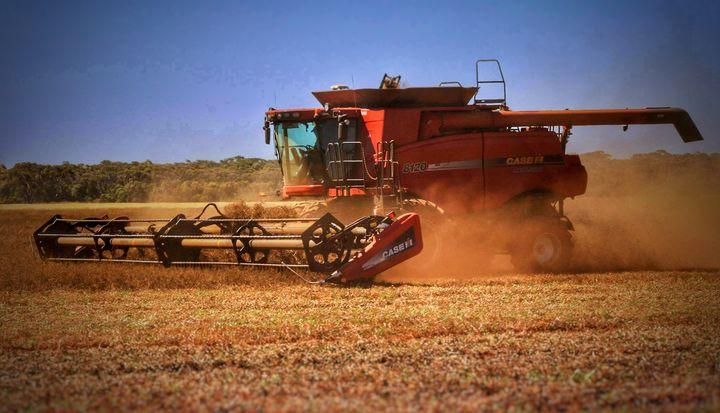 Harvest time - Camo