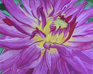 Dazzling Pink Dahlia