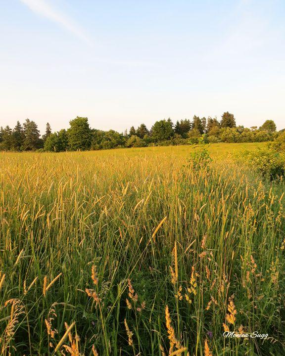 Golden Hay Field - Monica Sugg