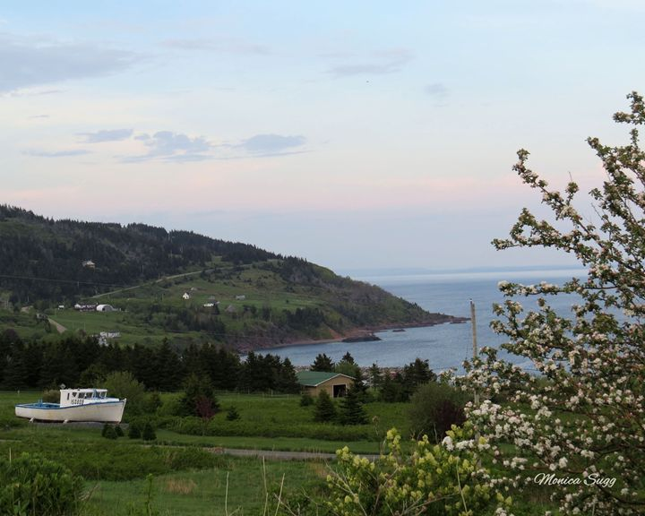 Apple Blossoms at Cape George - Monica Sugg