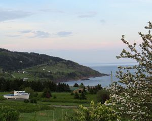 Apple Blossoms at Cape George