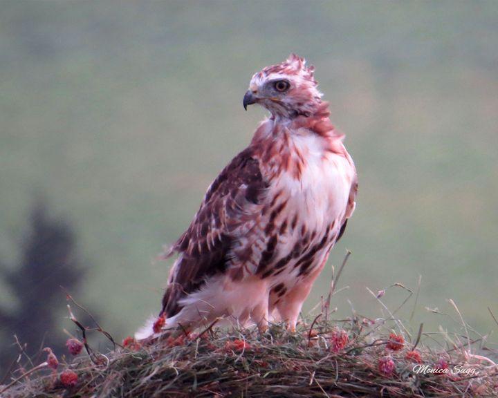 Hawk's Eye - Monica Sugg