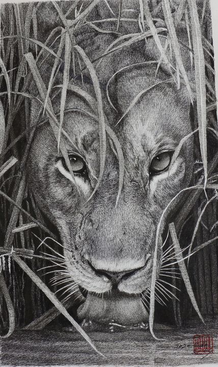 a lion drinking water - J.S.