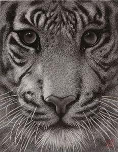 Tiger - J.S.