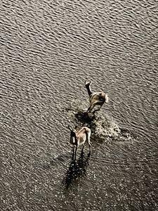 Deers in a dam