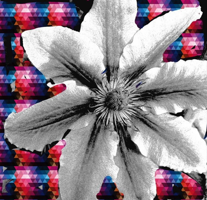 Black and white Clamatis - Fiona Sutherland Muir