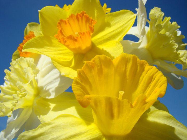 Daffodils Bouquet Floral Art Prints - ArtPrintsGifts