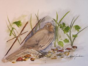 My back yard friend 283 - Mark Jenkins Watercolors