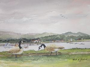 Canadian Geese 5 - Mark Jenkins Watercolors
