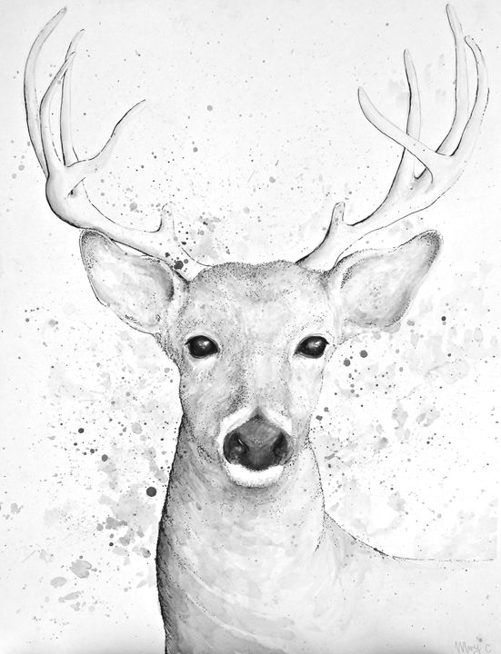 Deer - Mary Campbell