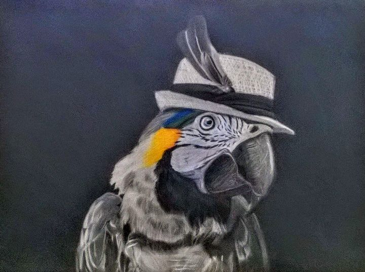 Blue Throat-ed Macaw with hat - Alec Carr