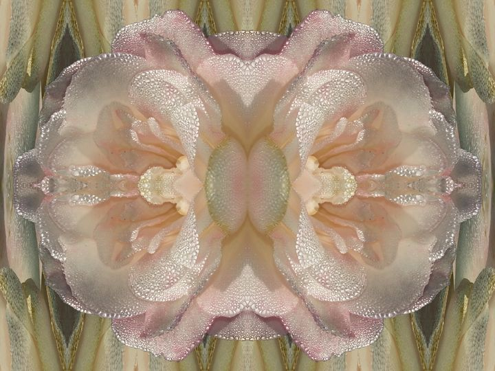 Classic as pearls love - Harold' s Digital Art Anthem