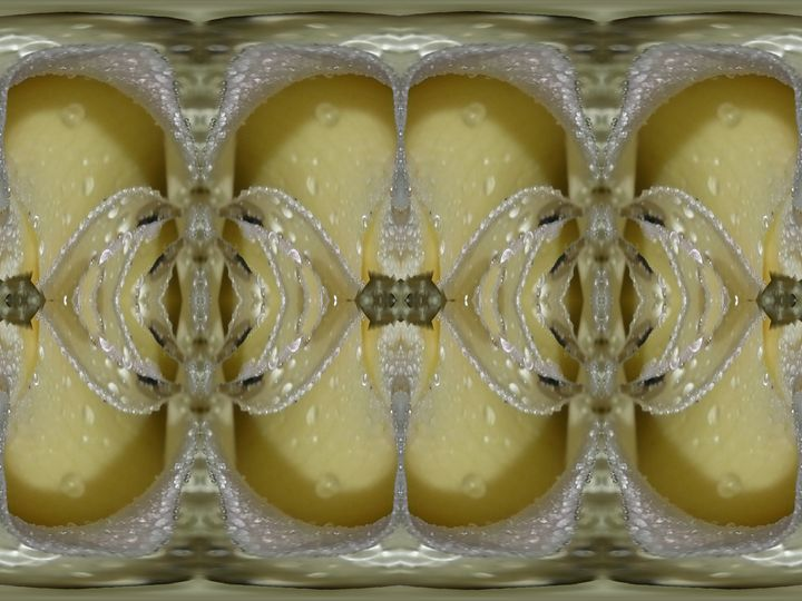 love is kind, not callous - Harold' s Digital Art Anthem