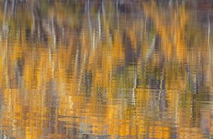fall abstract 2