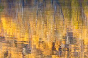 fall abstract 3