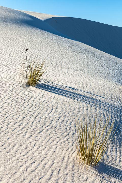 sand yucca - Jonathan Nguyen