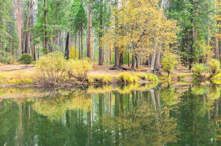 trees and reflections - Jonathan Nguyen