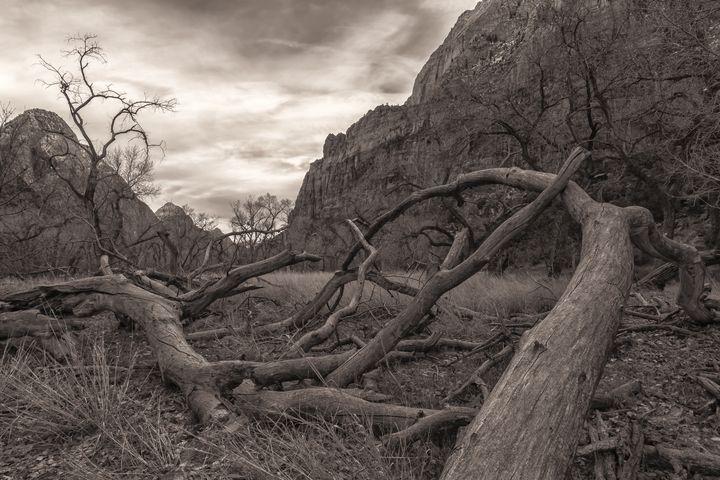 zion dead trees - sepia - Jonathan Nguyen