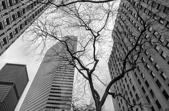 bared tree bw - Jonathan Nguyen