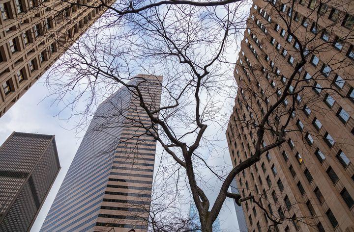 bared tree - Jonathan Nguyen