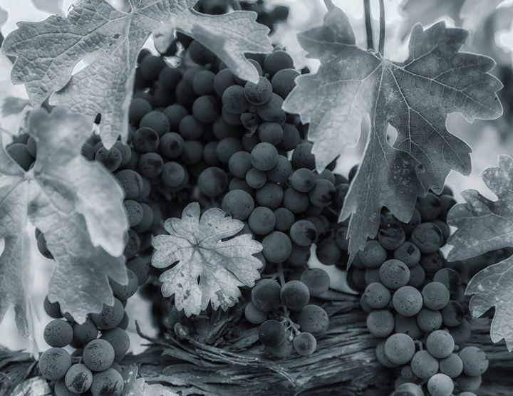 grapes bw - Jonathan Nguyen