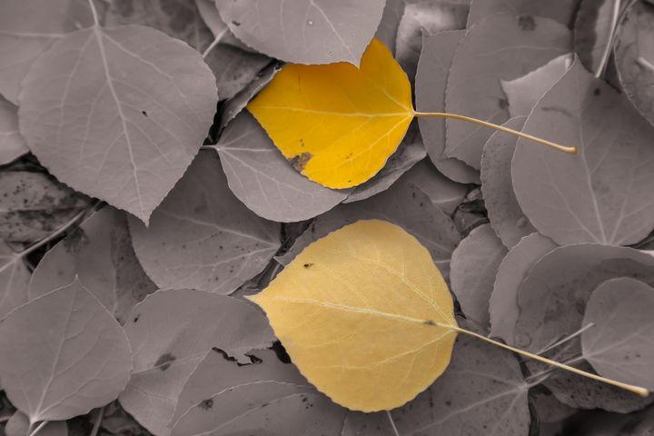 two leaves - Jonathan Nguyen