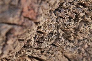 Tree Textures 3