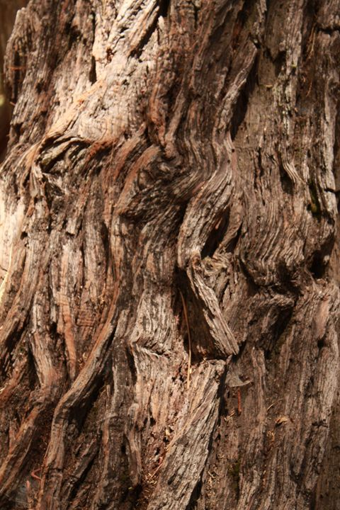 Tree Textures 1 - Nature Walks