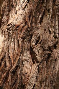 Tree Textures 1