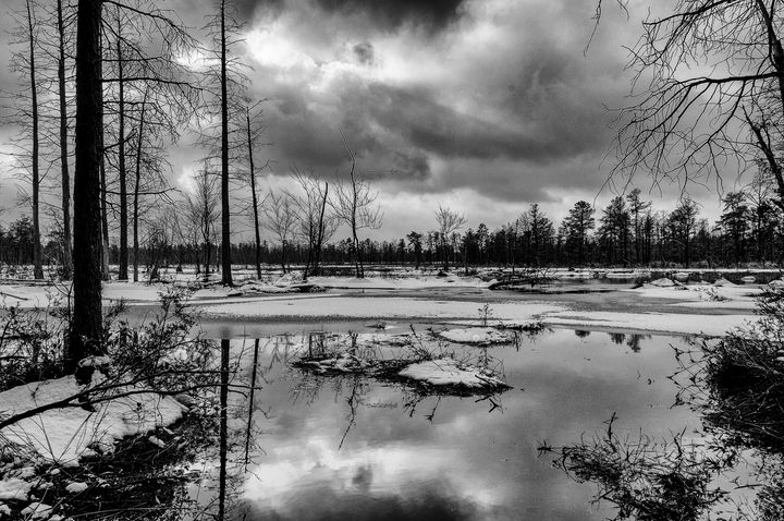 Winter in Wharton State Forest - Louis Dallara Photography