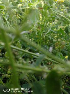 Photograph of grass