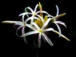 Flowers - Kauai Hawai'i