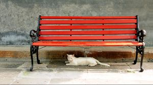 Cat Under a Red Bench