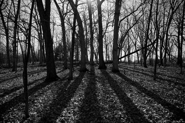 Forest in B/W - ch.o.ne