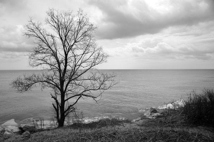 Tree in B/W III - ch.o.ne